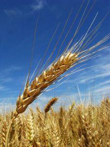 Productividad agricola ,  innovacion mayor rentabilidad
